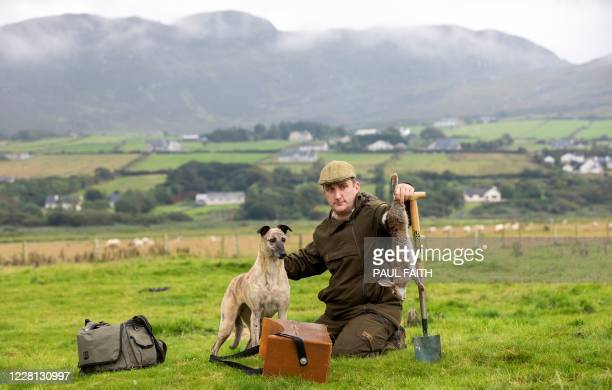 Professional rabbit catcher Steven McGonigal, poses for a photograph with his dog Fudge, and a 'dispatched' our caught rabbit, as he hunts for...