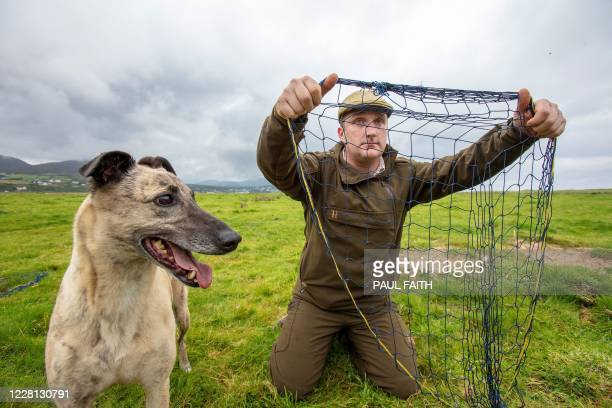Professional rabbit catcher Steven McGonigal with his dog Fudge sets a net as he hunts for rabbits in County Donegal northwest Ireland on August 18...