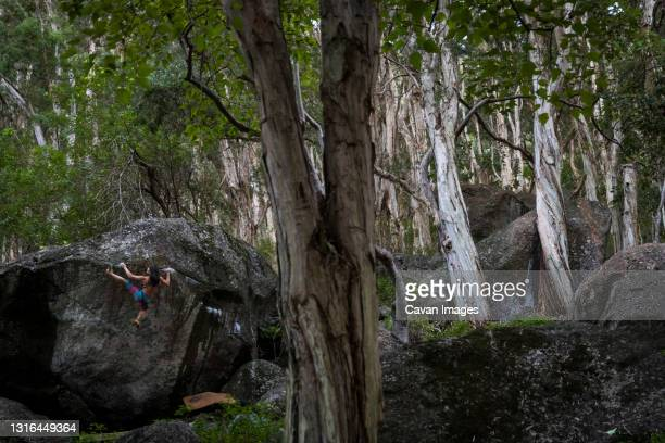 professional rock climbing female bouldering a huge rock in o'ahu - bedrock stock pictures, royalty-free photos & images