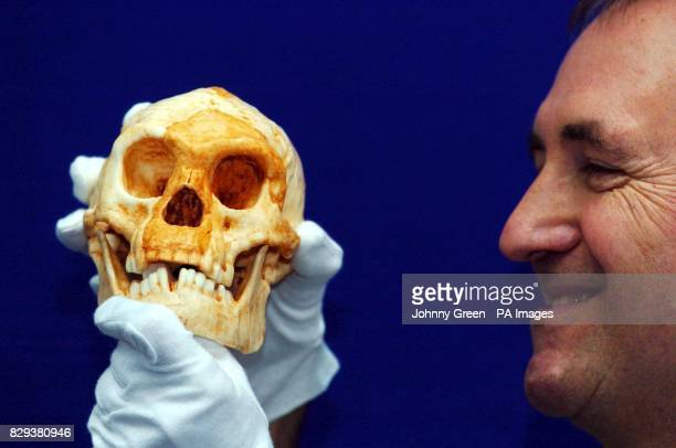 Professor Chris Stringer looks across at a new species of human living on the Indonesian island of Flores as recently as 18000 years ago during a...