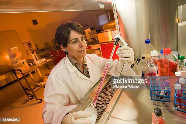 Professor Lihadh Al Gazali working in a lab She is the Laureate for Africa for the L'OREALUNESCO Award for Women in Science 2008 for the...