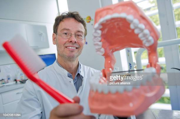 Professor of dentistry Christian Splieth demonstrates correct dental hygiene on the model of a set of teeth at the Centre for Dental and Oral...