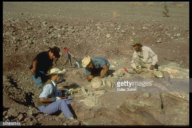 Professor Paul Sereno's team excavating African dinosaurs the theropod Afrovenator and the sauropod Jobaria
