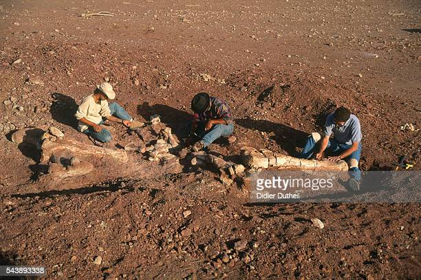 Professor Paul Sereno's team working on African dinosaurs the theropod Afrovenator and the sauropod Jobaria