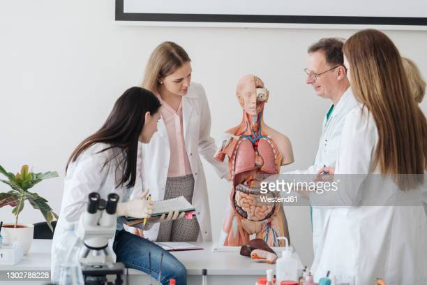 professor with students analyzing anatomy model in class - the human body stock pictures, royalty-free photos & images