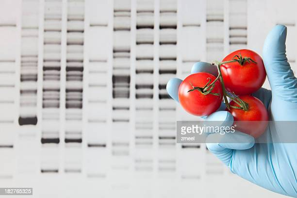 DNA profile background with gloved hand and tomatoes