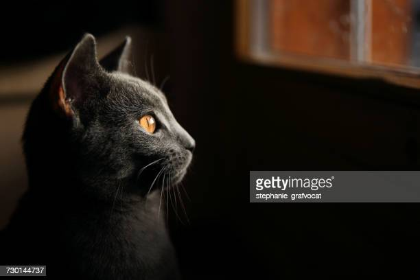 Profile of a cat looking through a window