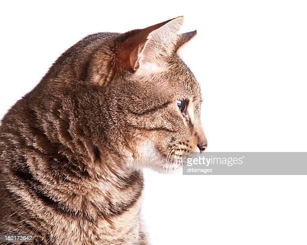 Profile of a cat