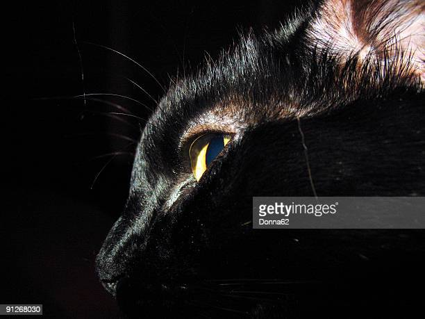Profile of Black Cat With Dark Background