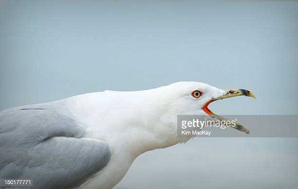 Profile of gull