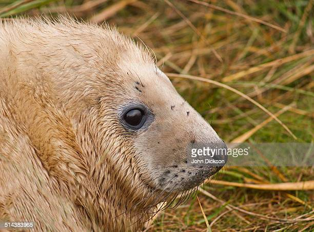 Profile portrait of a seal