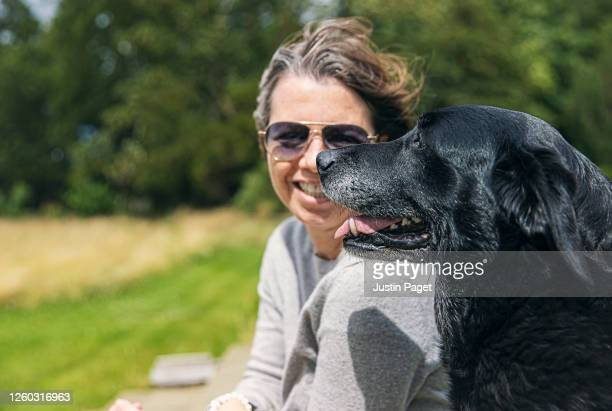 profile view of a senior labrador retriever with its owner - pet owner stock pictures, royalty-free photos & images
