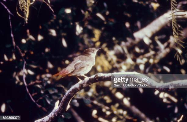Profile view of a small bird standing on a branch with a temporary red spray paint mark on its tail so it can be tracked for a Centers for Disease...