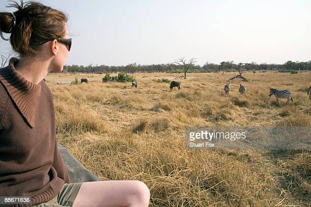 Profile view of a young woman observing wildebeest (Connochaetes taurinus) and zebra (Equus quagga), Okavango Delta, Botswana