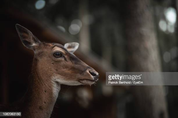 profile view of deer in forest - herbivorous stock pictures, royalty-free photos & images