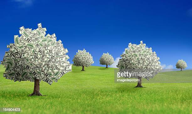 profit - money tree stock photos and pictures