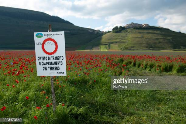 Prohibition sign to step on flower during the famous colorful flowering in Castelluccio di Norcia on June 29, 2020. Lots of tourists are visiting the...