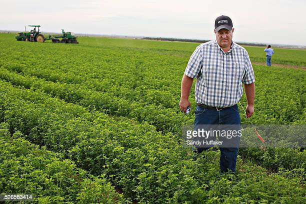 Project Manage Ed Hale with ACX Pacific walks through an Alfalfa field in Brawley California on Thursday December 11 2014A tougher stance by China on...