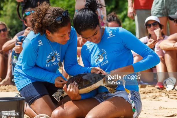 tamar project vorsätzliche erfassung von meeresschildkröten - umweltaktivist stock-fotos und bilder