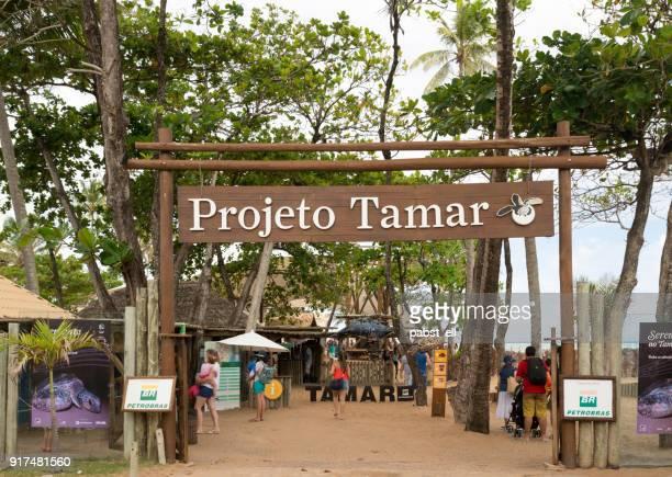 Projeto Tamar Bahia Praia do Forte