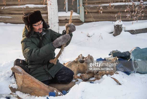 Prokopy Nogovitsyn shows part of a mammoth skeleton in the backyard of his house in a village in the northern Siberian region of Yakutia on November...