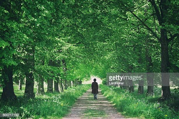 Promenade à travers les arbres