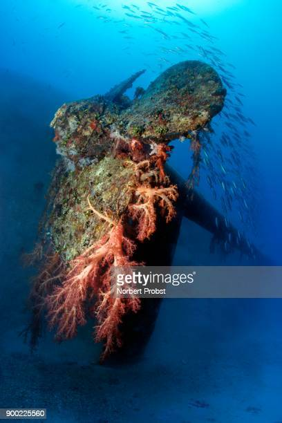 Propeller, soft corals (Dendronephthya klunzingeri) and school of fish, shipwreck El Arish or El Arish El-Tor, sunken car ferry, Port Safaga, Red Sea, Egypt