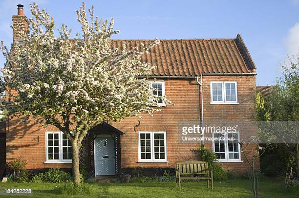 Property released red brick detached, house with apple tree blossom in the garden, Shottisham, Suffolk, England.