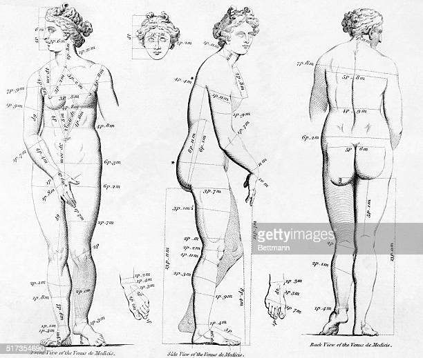 Proportion of female figure measurements based on classical sculpture Venus di Medici Copper engraving