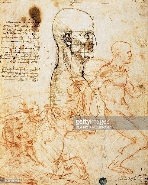 Proportions of the face by Leonardo da Vinci drawing 236 recto