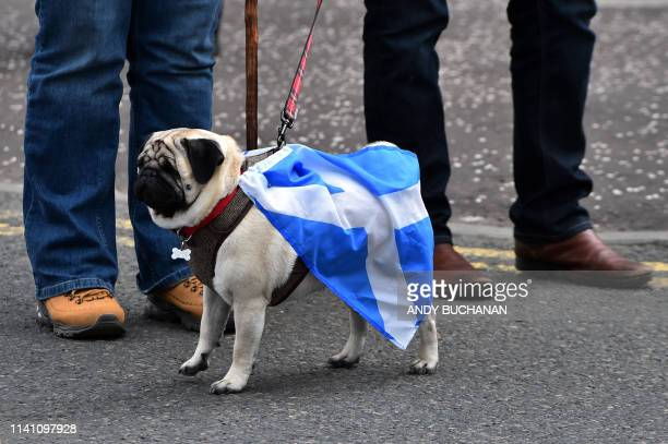 ProScottish Independence activists stand with theor dog draped in a Saltire flag as they march through the streets of Glasgow during the All Under...