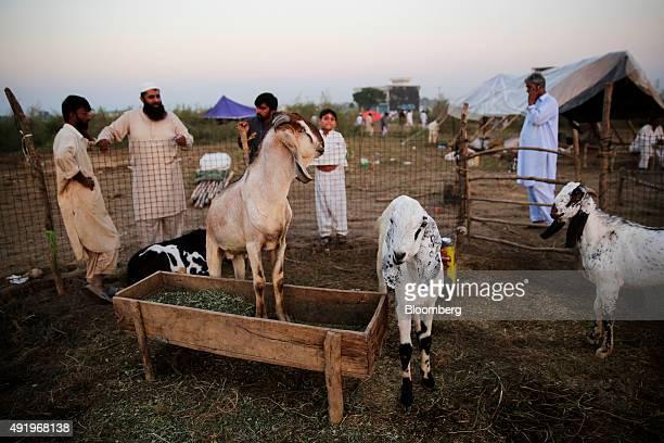 60 Top Pakistan Economic Survey 2015 16 Pictures, Photos and Images
