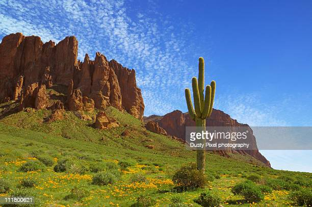 prospector's view - phoenix arizona stock pictures, royalty-free photos & images