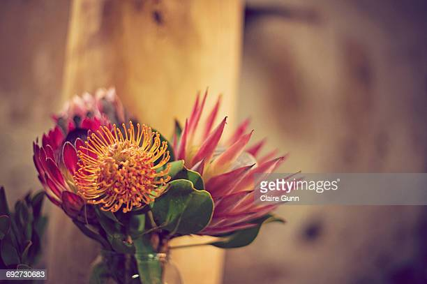 Proteas in a vase, Western Cape, South Africa.