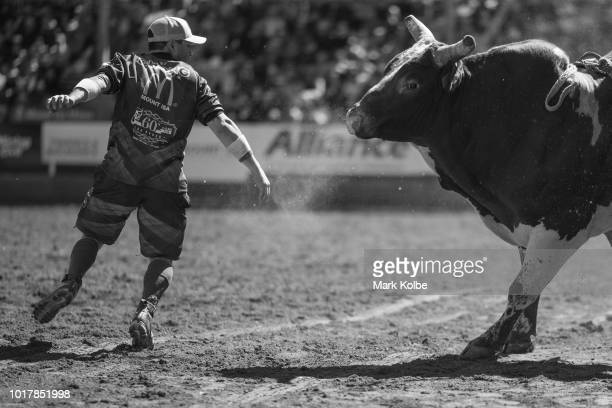 Protection athlete Darryl Chong attracts the attention of a bull during the Bull Ride competition of the 2018 Mount Isa Rotary Rodeo at the Buchanan...