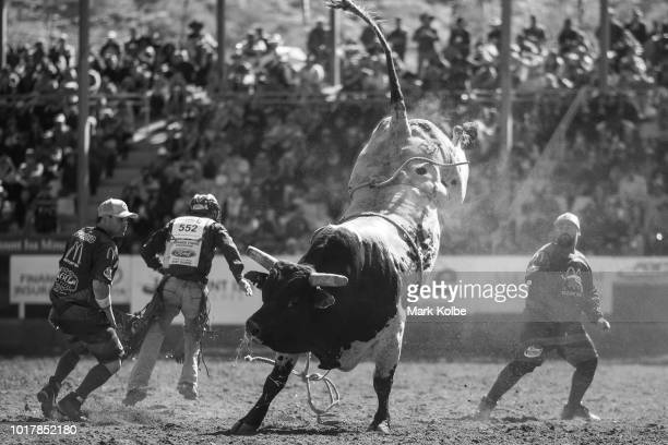 Protection athletes Darryl Chong and Lincoln Brown evade a bucking bull during the Bull Ride competition of the 2018 Mount Isa Rotary Rodeo at the...