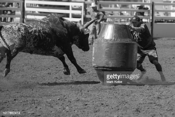 Protection athletes Darryl Chong hides behind a barrel as he evades a bull during the Bull Ride competition of the 2018 Mount Isa Rotary Rodeo at the...