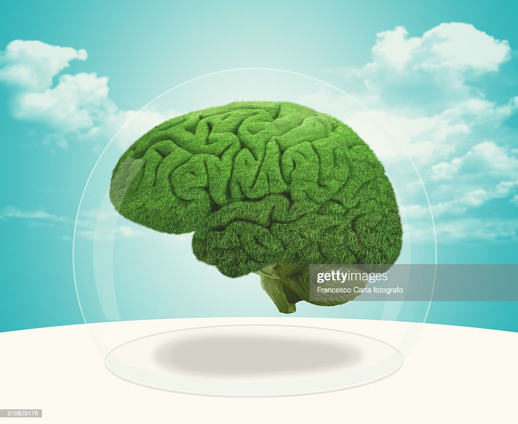 Protection brain : Stock Photo