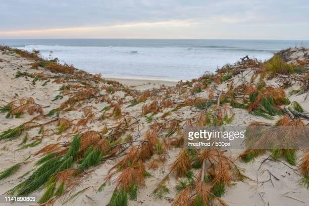 protection of sand dunes - biscarrosse photos et images de collection