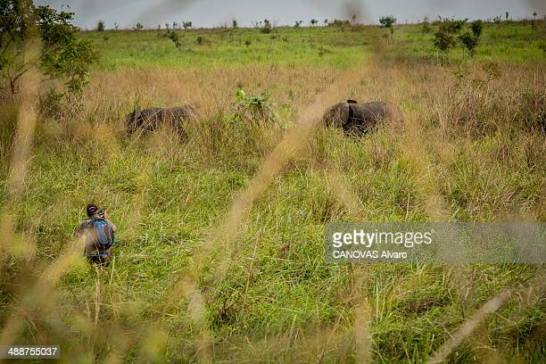 Protection of the elephant in Garamba Park to save the elephants and to protect them against poachers the teams of the park equip the elephants with...