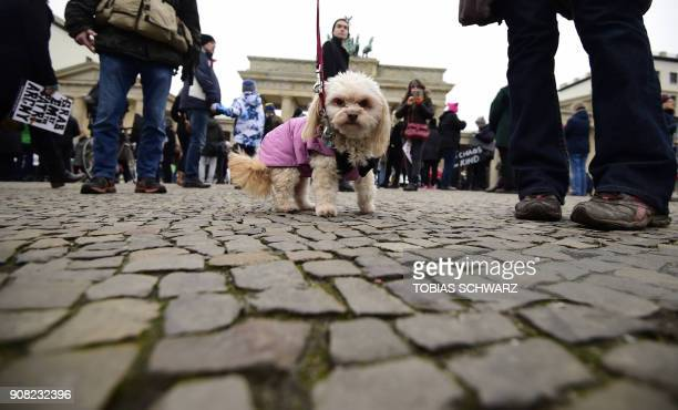 Protersters with a dog demonstrate against the US president and his policies at Berlin's landmark the Brandenburg Gate near the US embassy in Berlin...