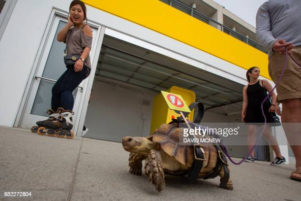 A protest message is affixed to a turtle as residents demonstrate near a building converted into a Snap Inc vender of Spectacles sunglass cameras for...