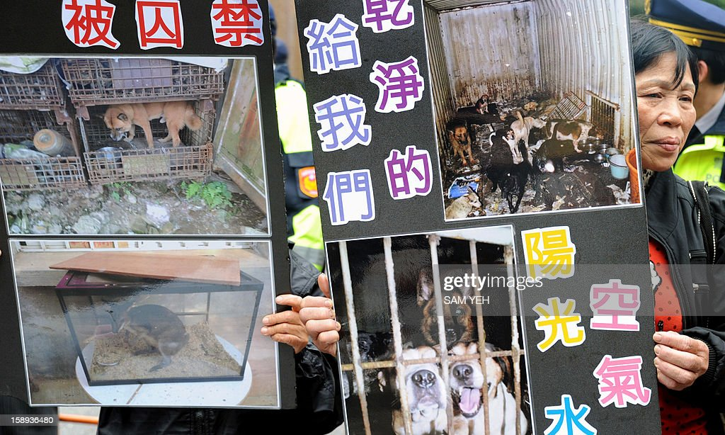 A protester displays pictures of abused animals during a demonstration in front of the Taiwan government's agriculture council in Taipei on January 4, 2013. The Taiwan Society for the Prevention of Cruelty to Animals demanded the agriculture ministry stop boycotting an animal protection law that the parliament is scheduled to review later this month and demanded the government stop putting down stray animals. AFP PHOTO / Sam Yeh