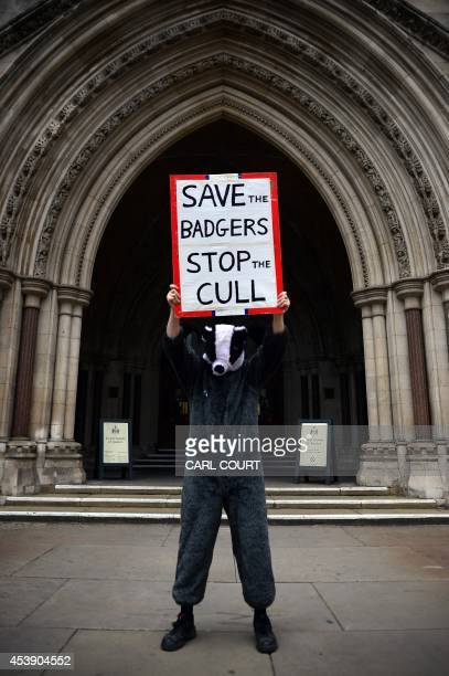 A protester dressed in a badger costume takes part in a demonstration against badger culling outside the High Court in London on August 21 2014...