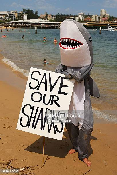 A protester in a shark suit holds signage against the catching and killing of sharks in Western Australia at Manly Beach on February 1 2014 in Sydney...