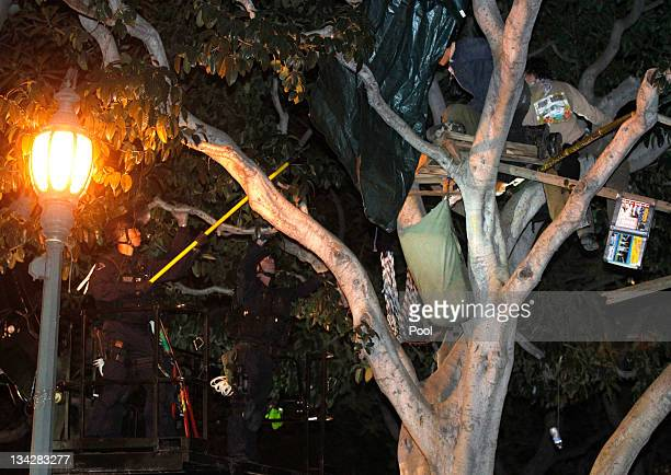 A protester is arrested after camping in a tree as Los Angeles police officers dismantle the Occupy LA encampment following a raid by LAPD in the...