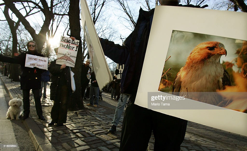 Protesters are shown near where famous red-tailed hawk Pale Male is
