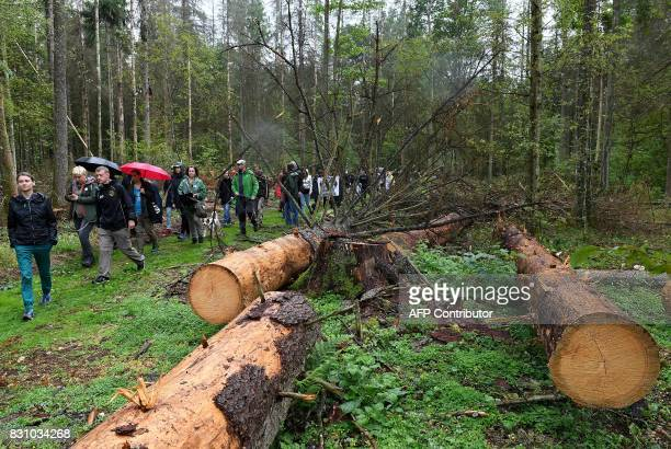 Protesters attend a protest against the cutting of trees in the Bialowieza Forest in Stara Bialowieza Poland on August 13 2017 The European...