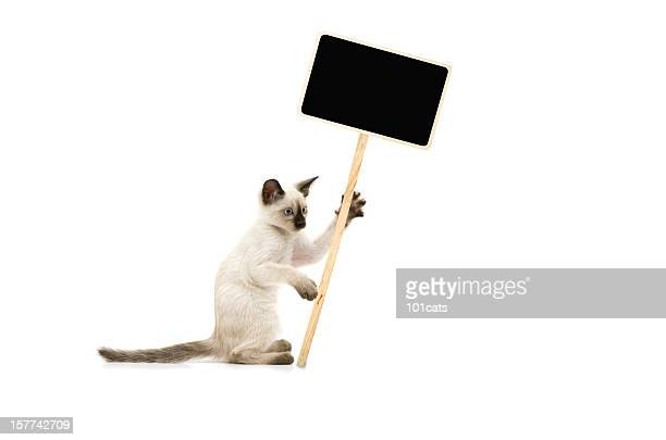 protesters cat - social issues stock pictures, royalty-free photos & images