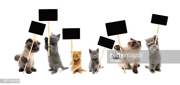 protesters cats - picket stock pictures, royalty-free photos & images